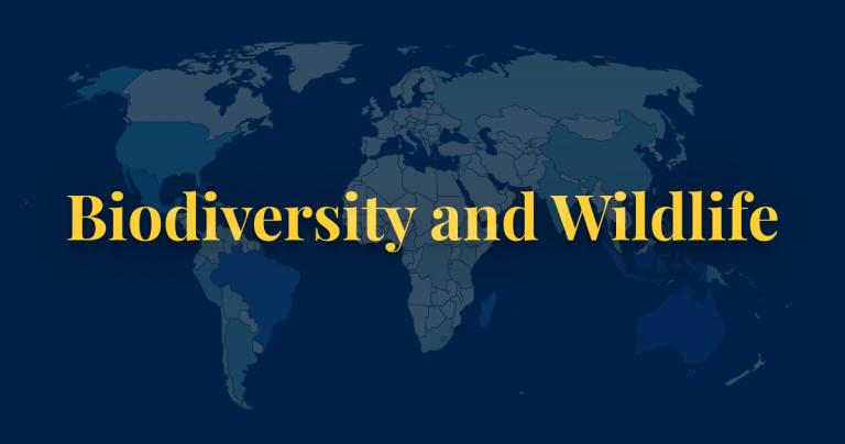 Biodiversity and wildlife thumbnail