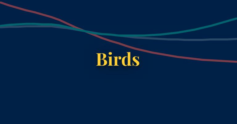 Birds thumbnail