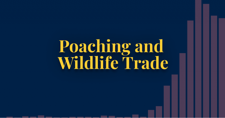 Poaching and wildlife trade thumbnail