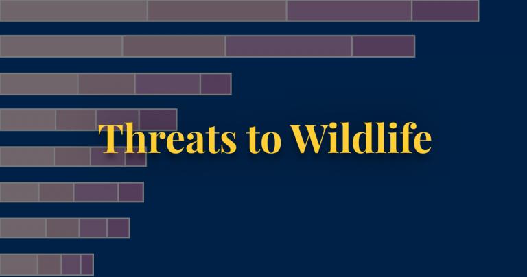 Threats to wildlife thumbnail