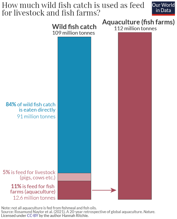How much fish is used as feed