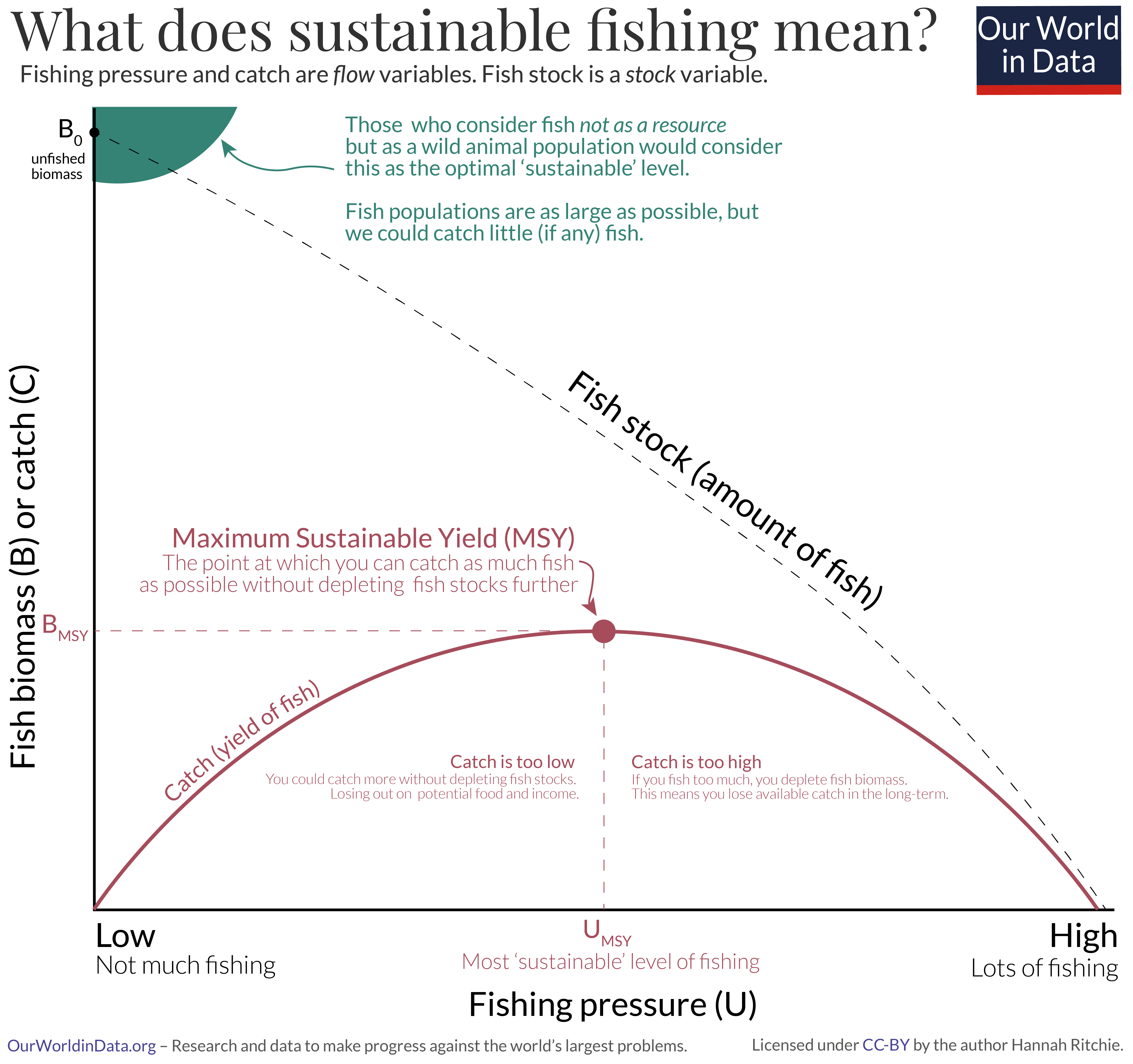 Maximum sustainable yield of fish with addition